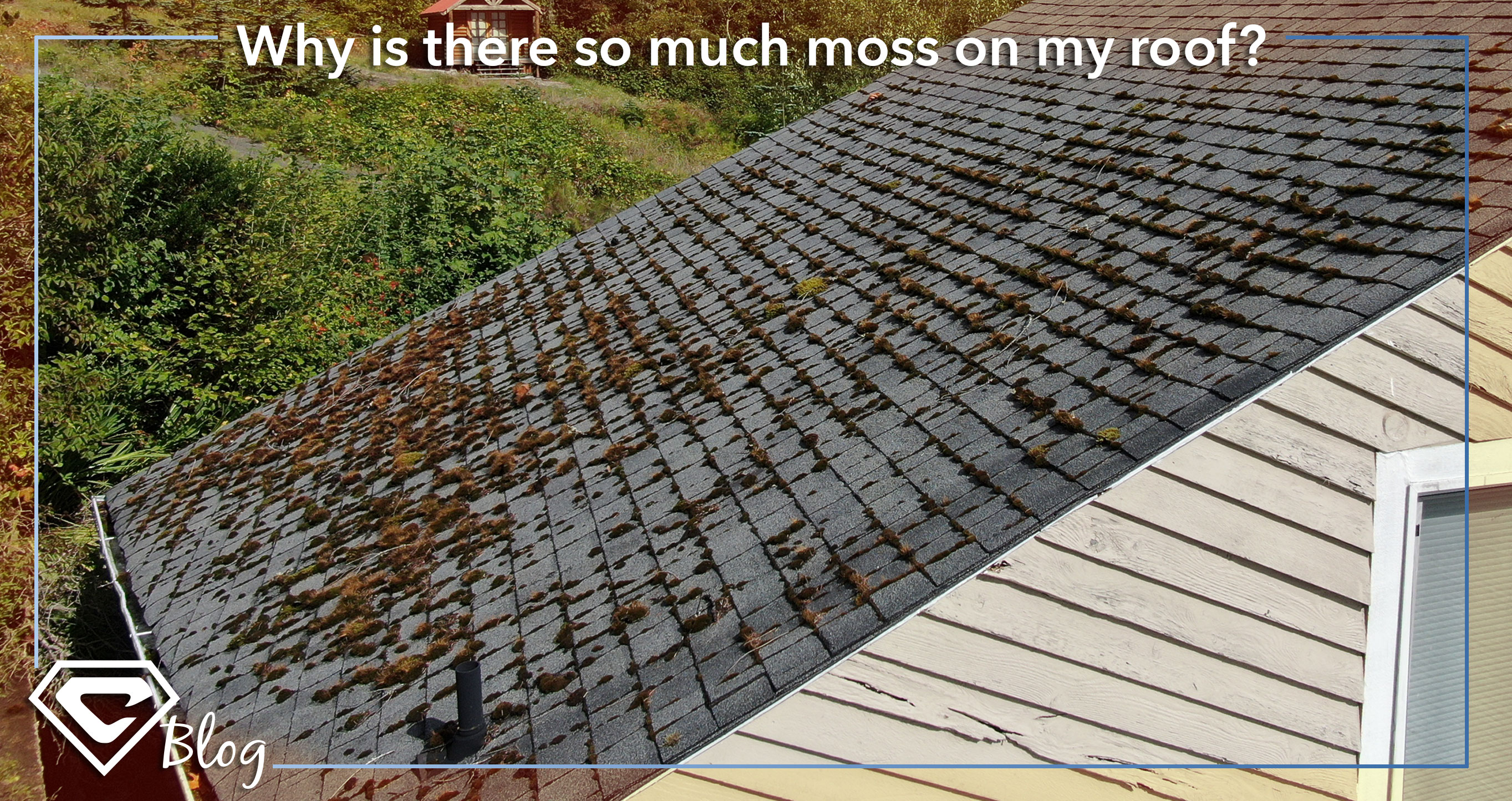 2020-blog-feature-images_Moss